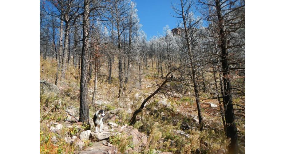 5 Terrific Technical Boulder Trail Runs