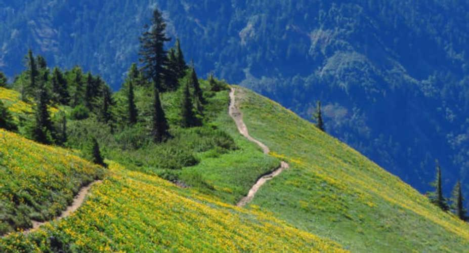 Ten Spring Wildflower Hikes to See Gorgeous Blooms