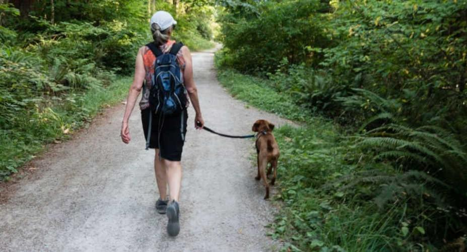 The right way to walk your dog