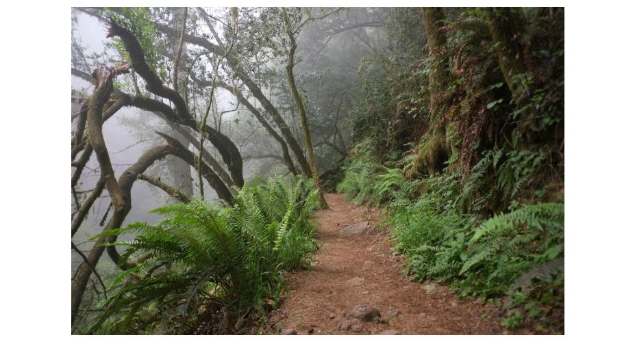 THE BEST DAY HIKES AROUND SAN FRANCISCO: 7 LOCAL FAVORITES