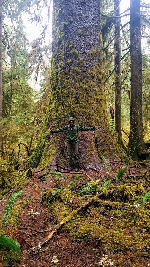 Ryan_Anderson_Huge_Tree_Hoh_Rainforest
