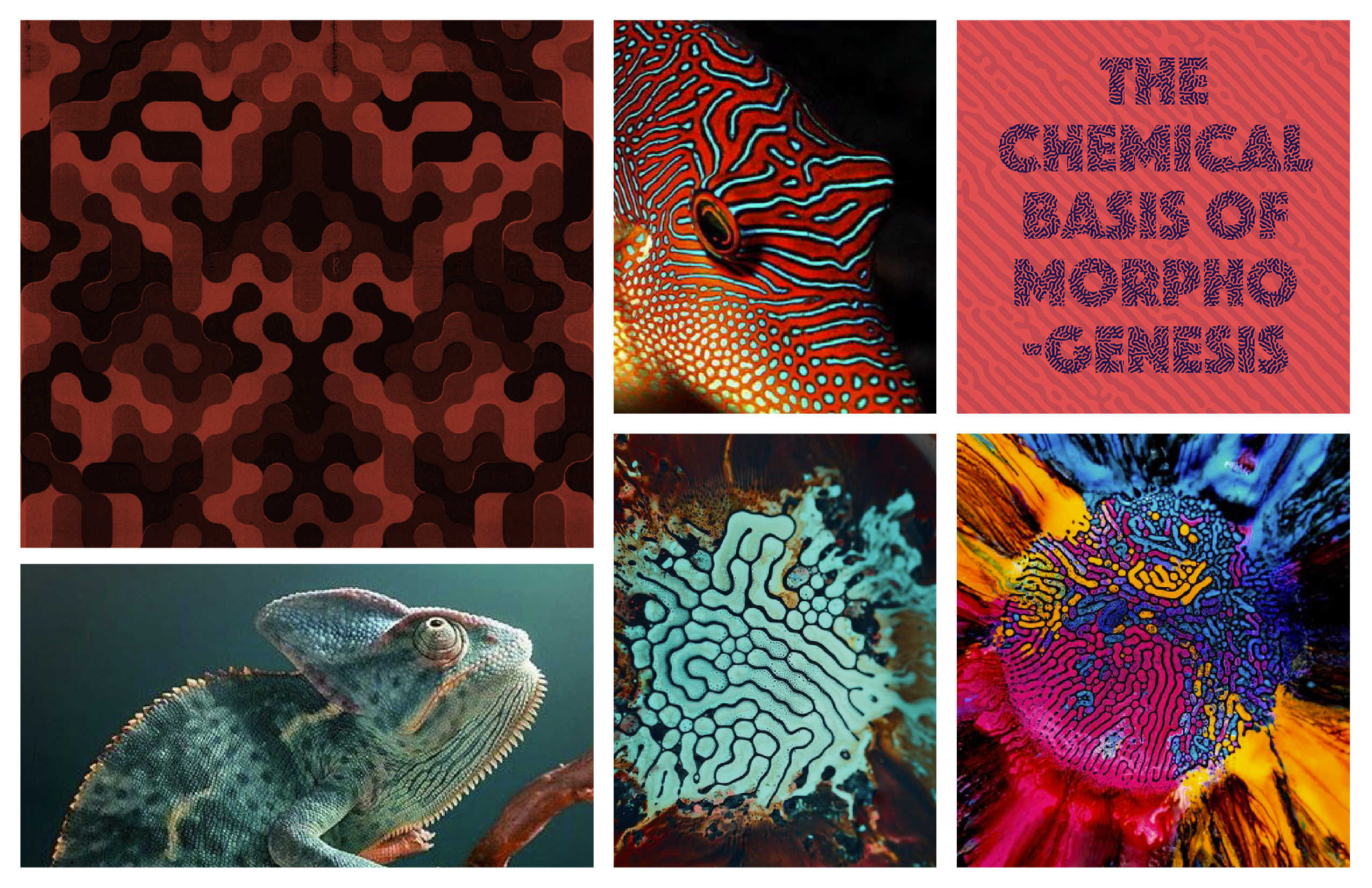 ADAPT mood board with colors and patterns inspired by the way nature adapts
