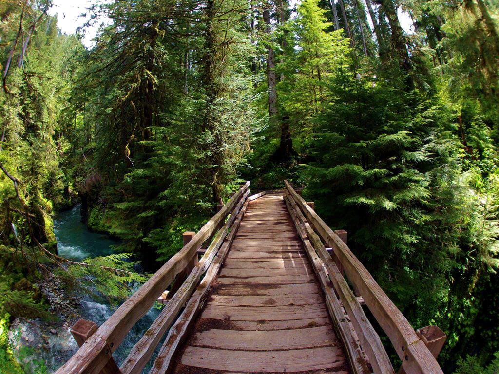 Pony Bridge in the Quinault Rainforest Douglas Scott