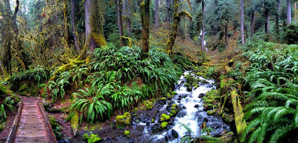Trail running the Hoh-Rainforest - Douglas Scott