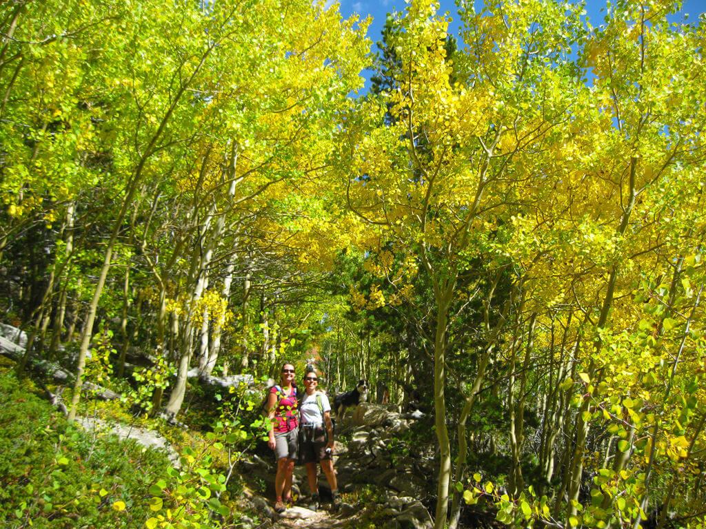 Aspen corridor on the St. Vrain Trail. James Dziezynski